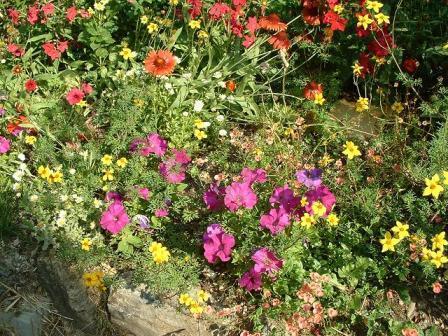 massifs fleuris de mon jardin